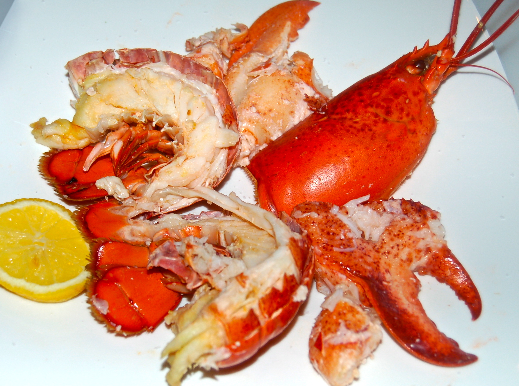How to Steam Lobster pics